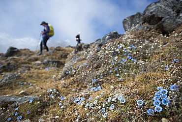 Trekking down towards Ghopte from the Laurebina La in the Langtang trekking region, Himalayas, Nepal, Asia