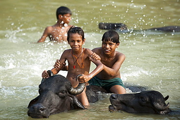 Children play in a river with the water buffaloes, Kapilvastu District, Nepal, Asia