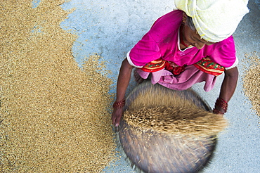 Woman panning rice (winnowing) so the unwanted husks fly out of the pan leaving the grains of rice inside, Dolghat, Nepal, Asia
