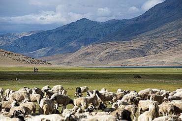 Nomads near Tso Moriri in the remote region of Ladakh, north India, Asia