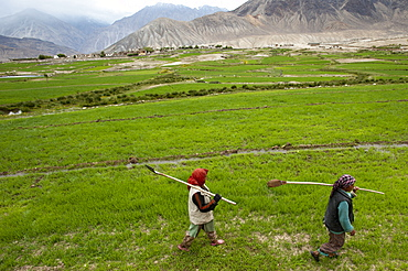 Women farmers carry irrigation tools like small spades used to channel the precious water to their fields, Ladakh, India, Asia