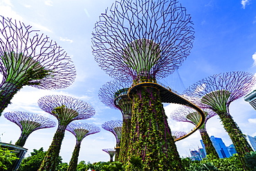 Supertree Grove in the Gardens by the Bay, a futuristic botanical gardens and park, Marina Bay, Singapore, Southeast Asia, Asia