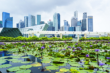 Water lily garden by the ArtScience Museum with city skyline beyond, Marina Bay, Singapore, Southeast Asia, Asia