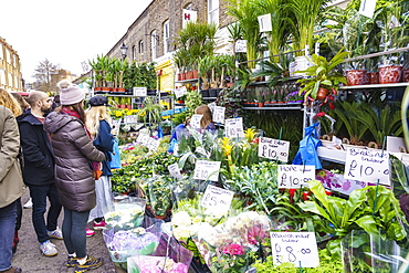 Columbia Road Flower Market, a very popular Sunday market between Hoxton and Bethnal Green in East London, London, England, United Kingdom, Europe