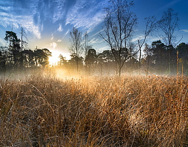Dawn light over Strensall Common Lowland Heath, Nature Reserve, near York, North Yorkshire, England, United Kingdom, Europe