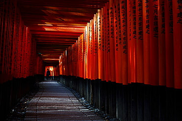 Torii tunnel, Fushimi-inari shrine, Kyoto, Japan, Asia