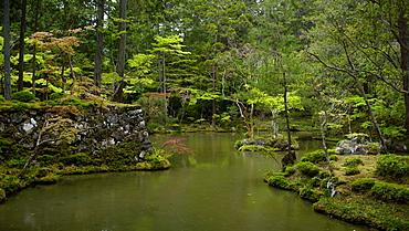 The moss gardens of Saiho-ji temple, Kyoto, Japan, Asia