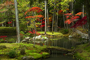 Autumn colours in the moss garden of Saiho-ji temple, UNESCO World Heritage Site, Kyoto, Japan, Asia