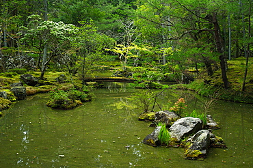 Pond in the moss garden of Saiho-ji temple, UNESCO World Heritage Site, Kyoto, Japan, Asia