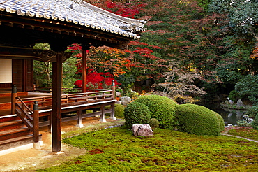 Zuishin-in temple moss garden in autumn, Kyoto, Japan, Asia