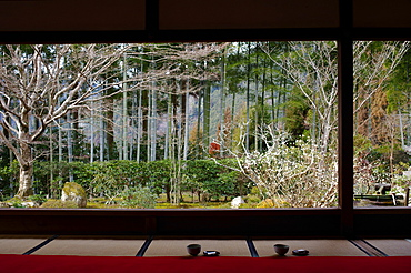 View on Japanese garden and bamboo forest, Hosen-in Temple, Kyoto, Japan, Asia