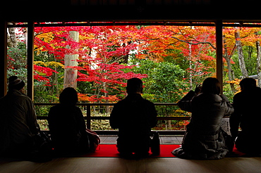 Admiring autumn colours in Daiho-in temple, Kyoto, Japan, Asia