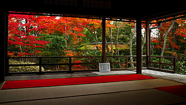 Autumn colours in Daiho-in temple, Kyoto, Japan, Asia