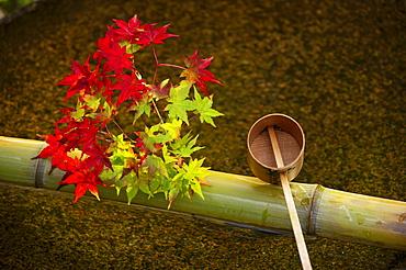 Tsukubai water basin with autumn decoration, Enko-ji temple, Kyoto, Japan, Asia