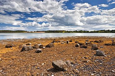 Reagh Island, Strangford Lough, County Down, Ulster, Northern Ireland, United Kingdom, Europe