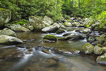 Mountain creek flowing through dense forest woods near the Appalachian Trail, North Carolina, United States of America, North America