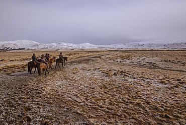 Icelandic horseback riders, Hveragerdi, Iceland, Polar Regions