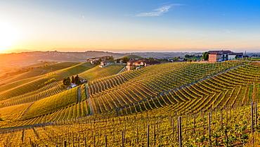 Vineyards at Barbaresco, Piedmont, Italy, Europe - 1243-1