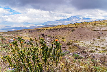 Cotopaxi National Park, a large forested area known for the active, snow-capped Cotopaxi volcano, Ecuador, South America