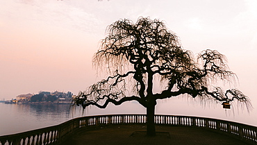 A bare tree at sunset next to Lake Maggiore with Isola Bella in the background, one of Borromeo Islands, Piedmont, Italian Lakes, Italy, Europe
