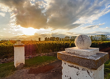 Vineyard of Bodega Viamonte, sunset, Lujan de Cuyo, Mendoza Province, Argentina, South America