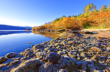 An autumn view on a calm sunny morning along the banks of Loch Sunart in the Ardnamurchan Peninsula, the Scottish Highlands, Scotland, United Kingdom, Europe - 1246-25
