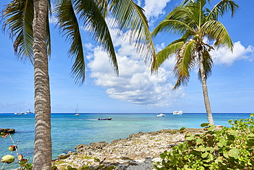 Turquoise water framed by coconut trees, in George Town, Cayman Islands, West Indies, Caribbean, Central America