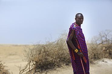 Maasai warrior, Ngorongoro Conservation Area, Tanzania, East Africa, Africa - 1249-19