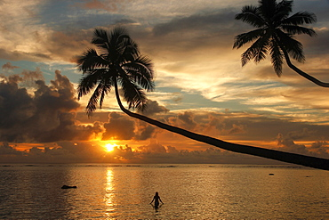 Silhouette of leaning palm trees and a woman at sunrise on Taveuni Island, Fiji, Pacific