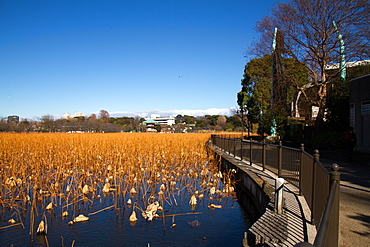 Ueno Park, Tokyo, Japan, Asia