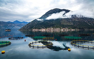 Looking across the Bay of Kotor towards the town of Perast, with circular fishing nets in the foreground, Bay of Kotor, UNESCO World Heritage Site, Montenegro, Europe