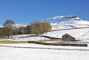 Pen-y-ghent with a covering of snow and traditional stone field barn (laithe) in winter at Horton-in-Ribblesdale, North Yorkshire, England, United Kingdom, Europe