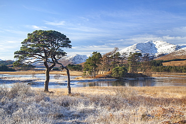 Hoar frosted grasses and view to the mountain peaks from Loch Tulla, Argyll and Bute, Highlands, Scotland, United Kingdom, Europe