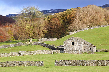 Stone field barn and dry stone walls beneath the slopes of Pen-y-ghent, Horton-in-Ribblesdale, Yorkshire Dales, North Yorkshire, Yorkshire, England, United Kingdom, Europe