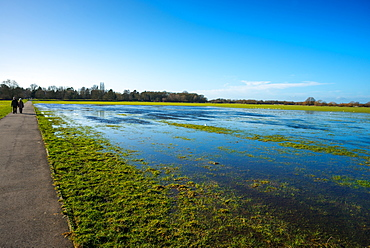 Flooded meadow between Hemingford Abbots and Houghton villages, Cambridgeshire, England, United Kingdom, Europe