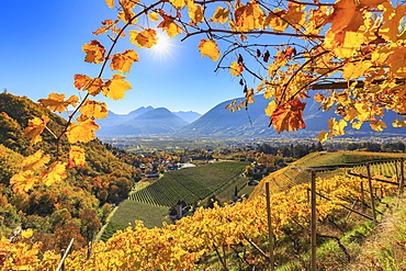 View of St. Valentin Church from vineyards, Merano, Val Venosta, Alto Adige-Sudtirol, Italy, Europe