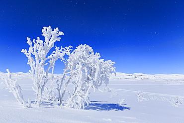 The full moon illuminates the snowy landscape, Riskgransen, Norbottens Ian, Lapland, Sweden, Scandinavia, Europe