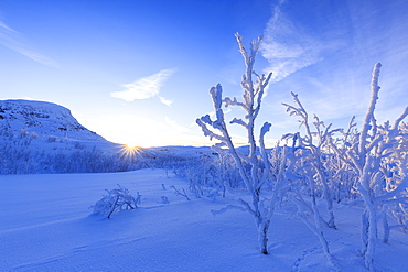 Last sun on frost plants, Riskgransen, Norbottens Ian, Lapland, Sweden, Scandinavia, Europe
