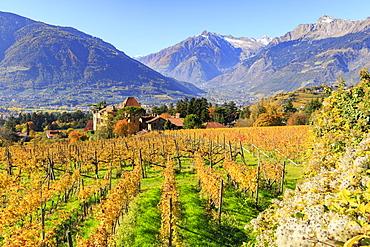 View of Ramez Castle surrounded by vineyards, Ramez Castle, Merano, Val Venosta, Alto Adige-Sudtirol, Italy, Europe