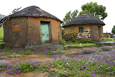Traditional huts with thatched roofs, Lesotho, Africa