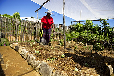 A female farmer watering her vegetables with a watering can, Lesotho, Africa