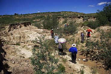 Women planting trees in a donga, a dry gully formed by running water, to help bind the soil, Lesotho, Africa