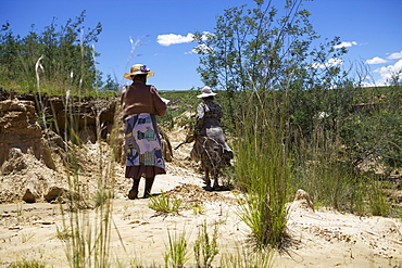 Woman planting trees in a donga, a dry gully formed by running water, to help bind the soil, Lesotho, Africa