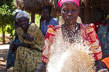 A woman sieves some grain by tossing and blowing the grain, Uganda, Africa