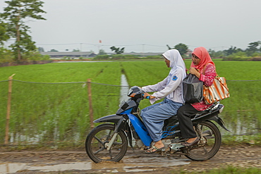 Two women riding past paddy fields on a motorbike, Indonesia, Southeast Asia, Asia
