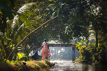 Backwaters near Alleppey (Alappuzha), Kerala, India, Asia