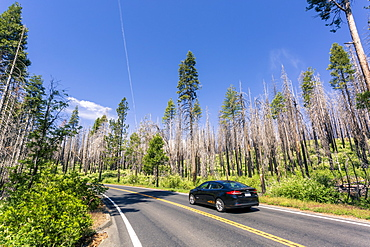 A forest fire destroys an area of forest in Yosemite Valley in the Yosemite National Park, UNESCO World Heritage Site, California, United States of America, North America
