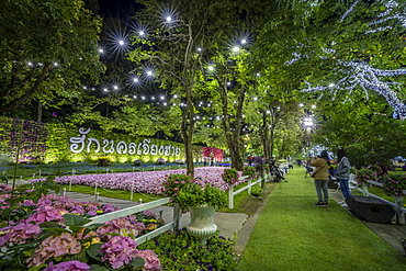 Beautiful and colourful flowers in Chiang Rai Flower Festival at night, Chiang Rai, Thailand, Southeast Asia, Asia