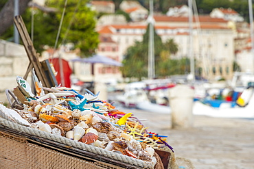 Boxes full of sea shells and sea stars for sale at the port of Hvar Town, Hvar, Croatia, Europe