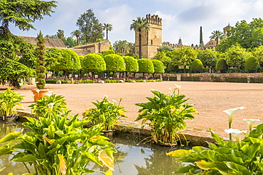 Garden of the Alcazar de los Reyes Cristianos, UNESCO World Heritage Site, Cordoba, Andalusia, Spain, Europe